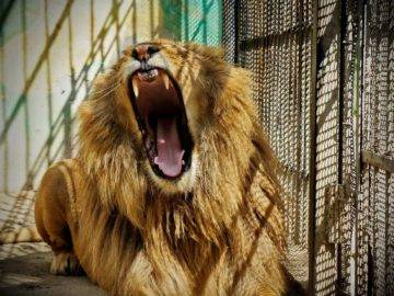 10 Terrifying Animals That Escaped From The Zoo