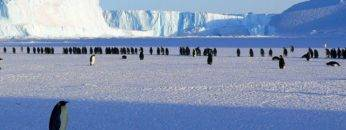 10 Incredible Recent Discoveries In Antarctica