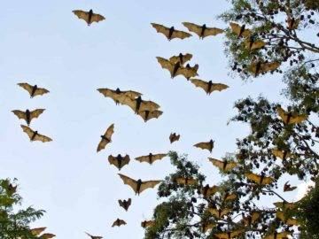 What Would Happen If All The Bats In The World Disappeared?
