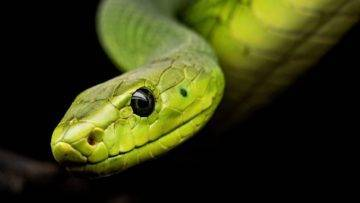 15 Most Beautiful Snakes In The World!