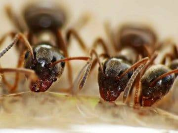 What If Humans Lived Like Ant Colonies