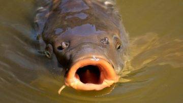 10 GIANT River Monsters In The World!