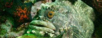 Top 9 Scariest Ocean Creatures That Swim With You