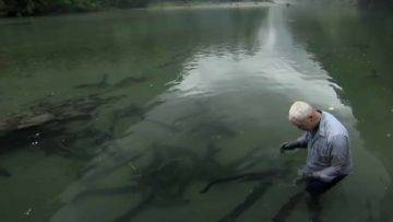 Can Electric Eels Kill You?
