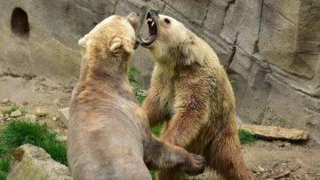 Top 15 Epic Animal Fights That Messed With The WRONG Opponent!