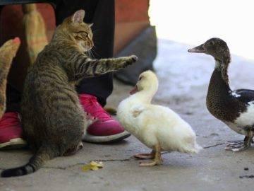 10 Strange Animal Friendships You Won't Believe Exist!