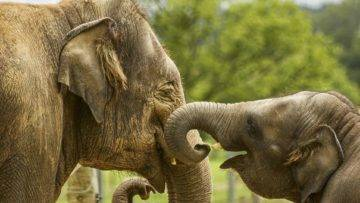 How Animals Mourn And Say Goodbye To The Dead