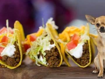 Top 10 BEST Mexican Fast Food Restaurants!