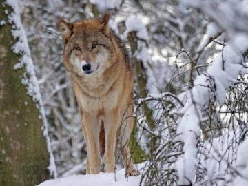 Top 15 Most Dangerous Animals In The Arctic!