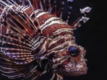 Top 10 Most Dangerous Animals In Australia!