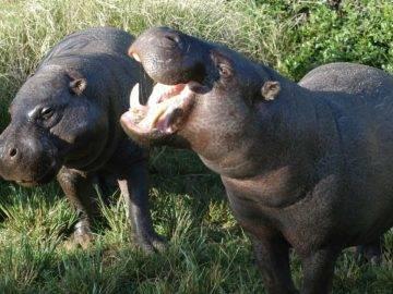 10 Most Unusual Dwarf Animals In The World!