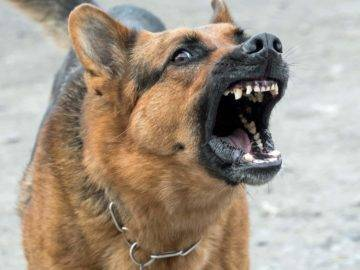 Top 10 Most Dangerous Dogs In The World!