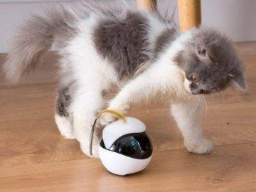 Top 11 Pet Smart Devices That Are Totally Amazing!