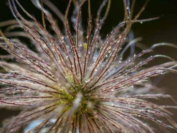 15 Strangest Plants In the World You Should NEVER Touch!