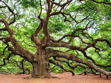 Top 15 STRANGEST Trees In The World!