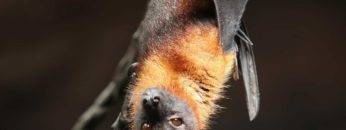 Top 15 Strangest Bats In The World!