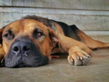 Top 15 Heartbreaking Goodbyes Between Pets And Their Owners!