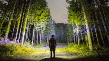 How to Survive If You Are Lost in the Forest!