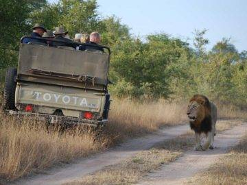 Top 26 Crazy Safari Moments Caught on Camera!