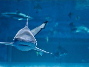 Top 10 Most Dangerous Shark Infested Waters In The World!