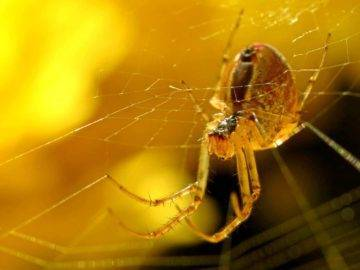 What Would Happen If We Killed All Spiders On Earth?