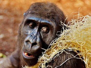 Really Smart Animals Doing Even Funnier Things!