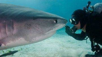 Diver And 15 Foot Tiger Shark Have Been Best Friends For Decades!