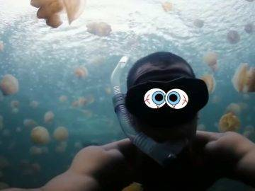 Would You Die If You Fell Into A Pool Of Jellyfish?