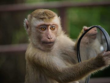 Top 20 Curious Reactions Of Animals Looking In The Mirror!