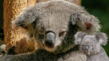 Top 8 Cutest Animals That Are Actually Quite Nasty!