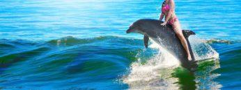 Top 10 Friendliest Sea Animals In The World!