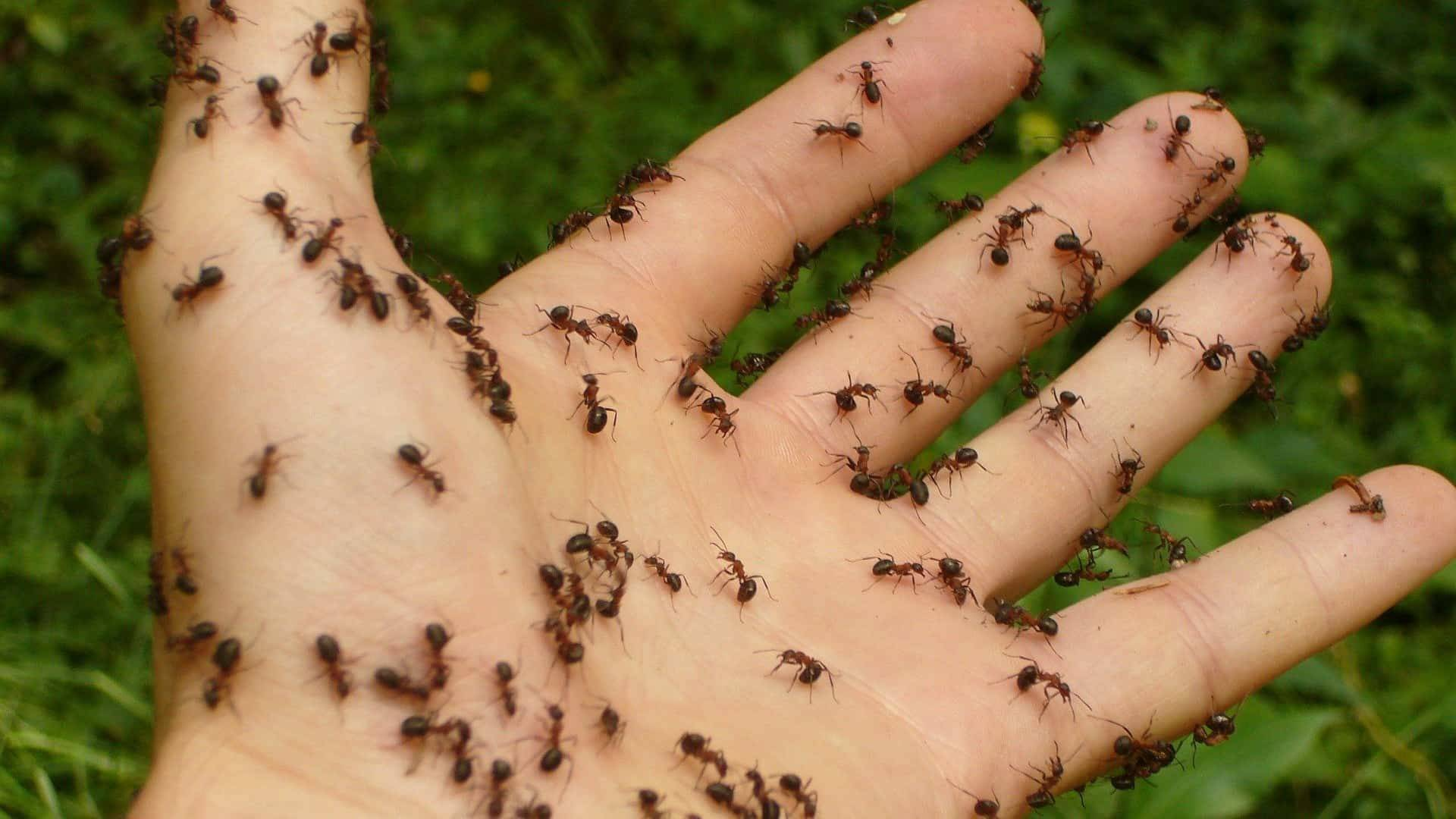 Top 8 Genius Ways To Stop Ants From Infesting Your House!