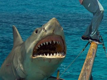 Top 7 Ways Jaws Changed The World (And Think About Sharks)