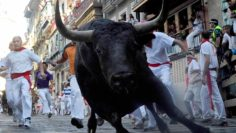 What To Do When A Raging Bull Charges You?